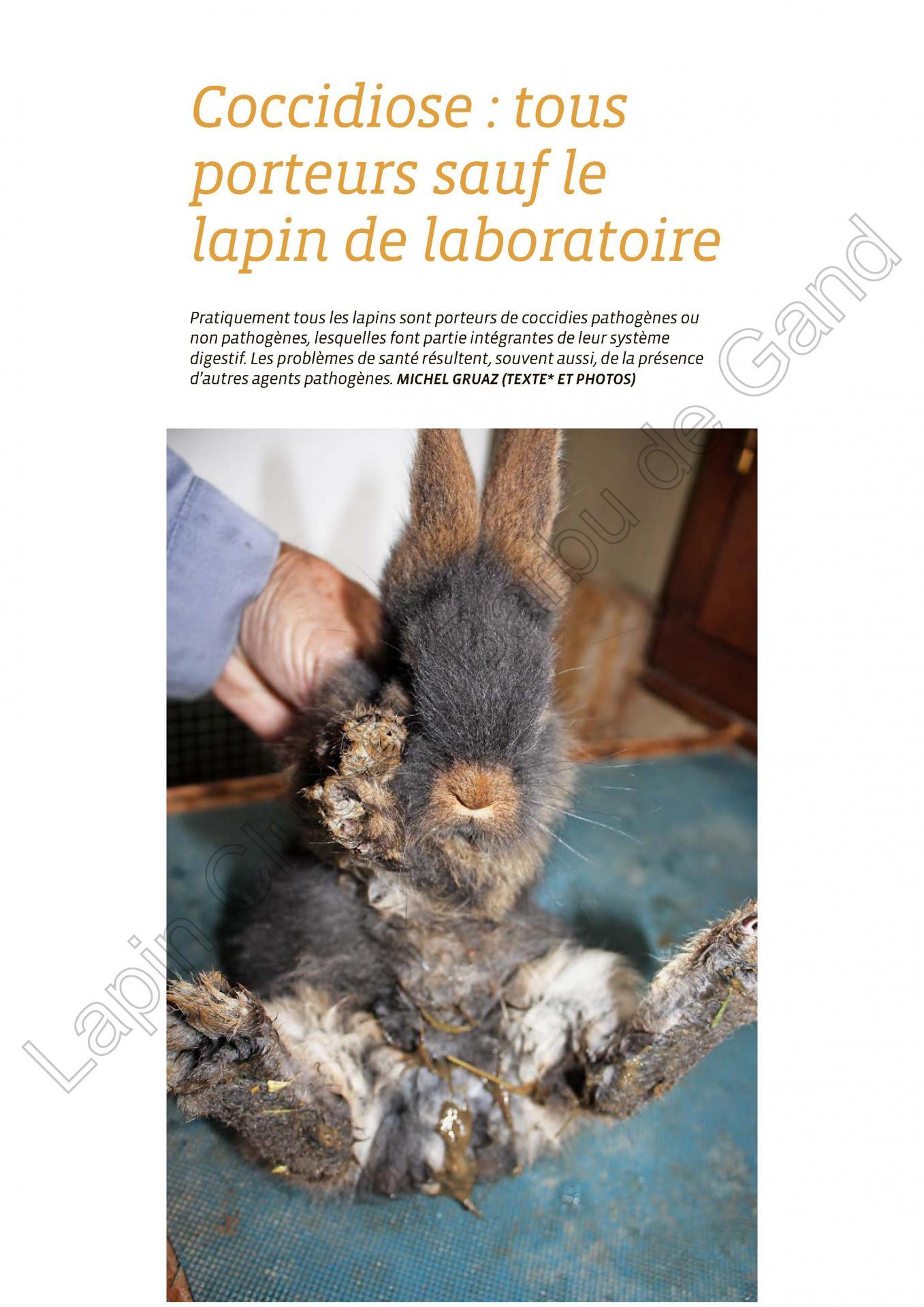 Coccidiose tous porteurs saufs le lapin de laboratoire 1