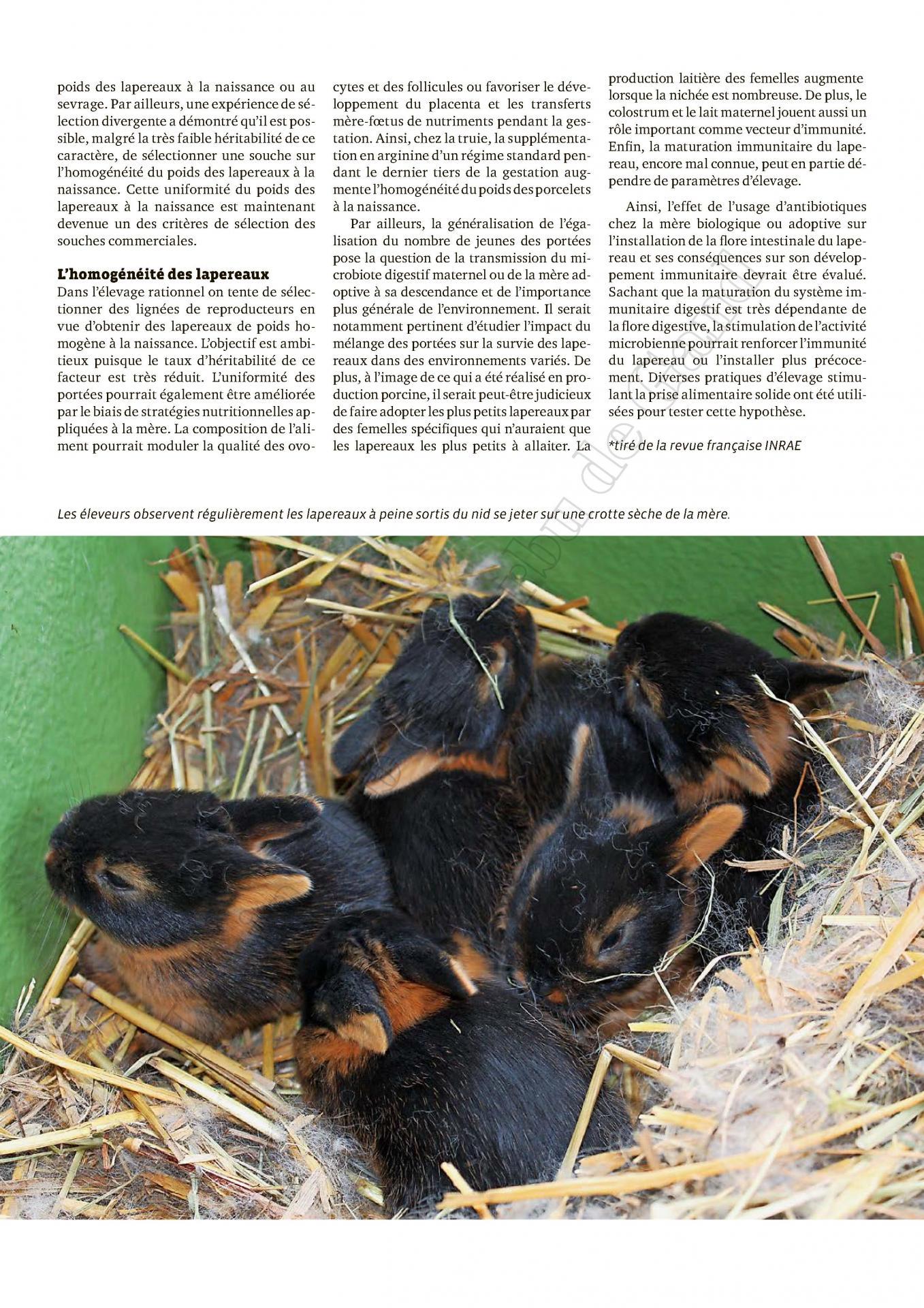 Des crottes dures deposees dans le nid des lapereaux 4