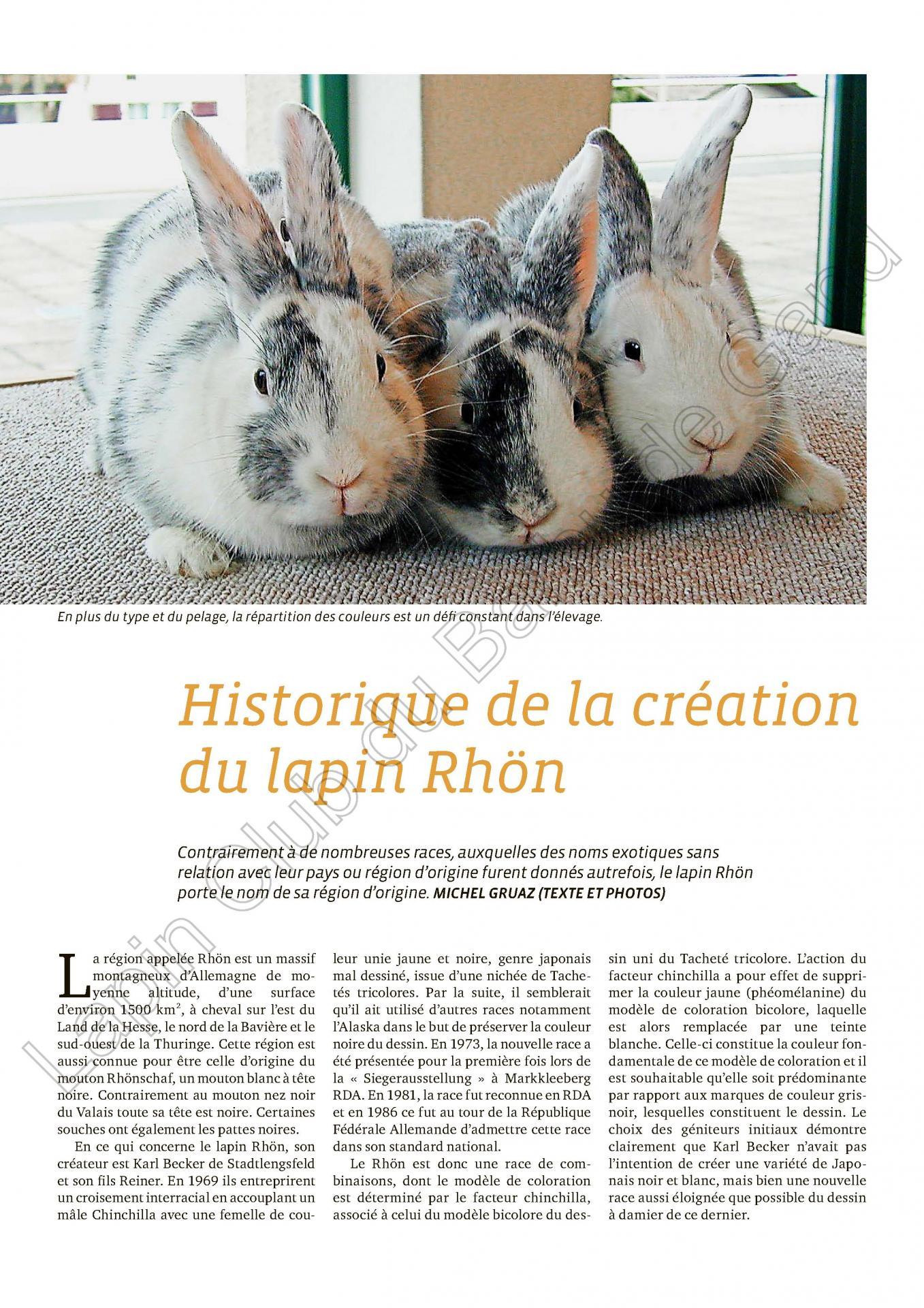 Historique de la creation du lapin rhon 1
