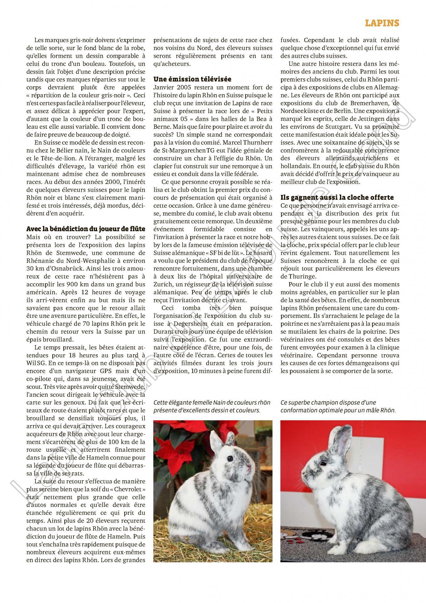 Historique de la creation du lapin rhon 2