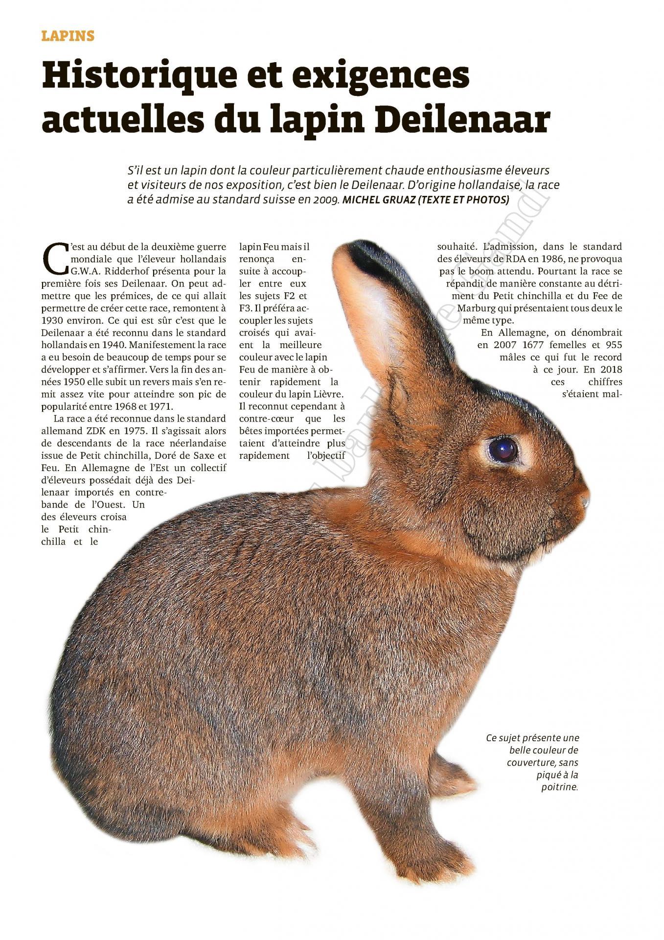 Historique et exigences actuelles du lapin deilenaar 1