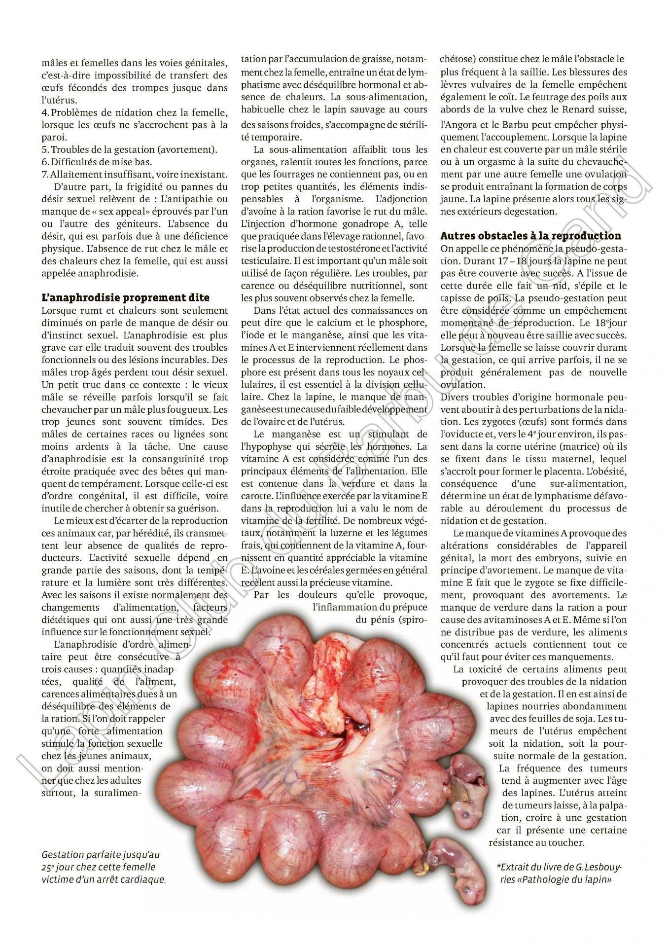 La physiologie sexuelle et la reproduction 2