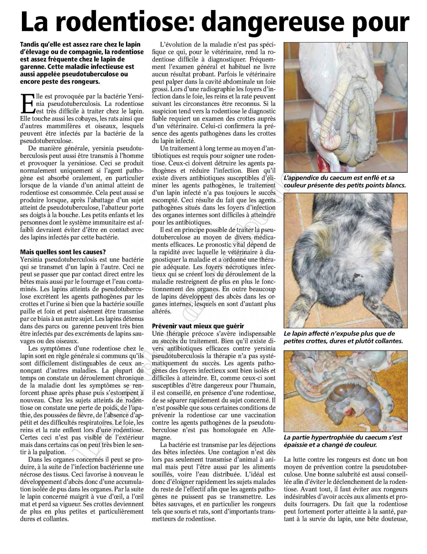 La rodentiose dangereuse pour l eleveur et le lapin 1