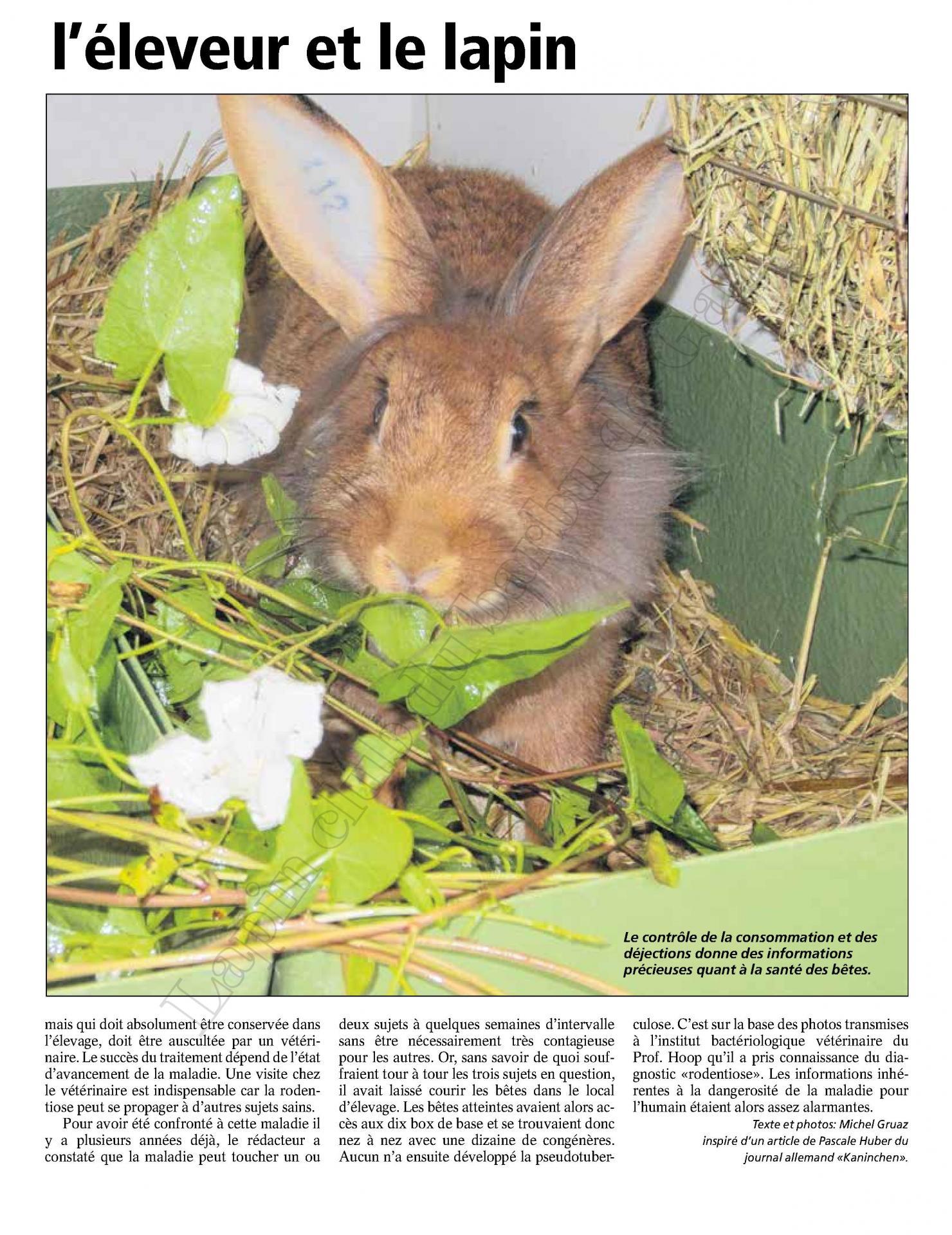 La rodentiose dangereuse pour l eleveur et le lapin 2