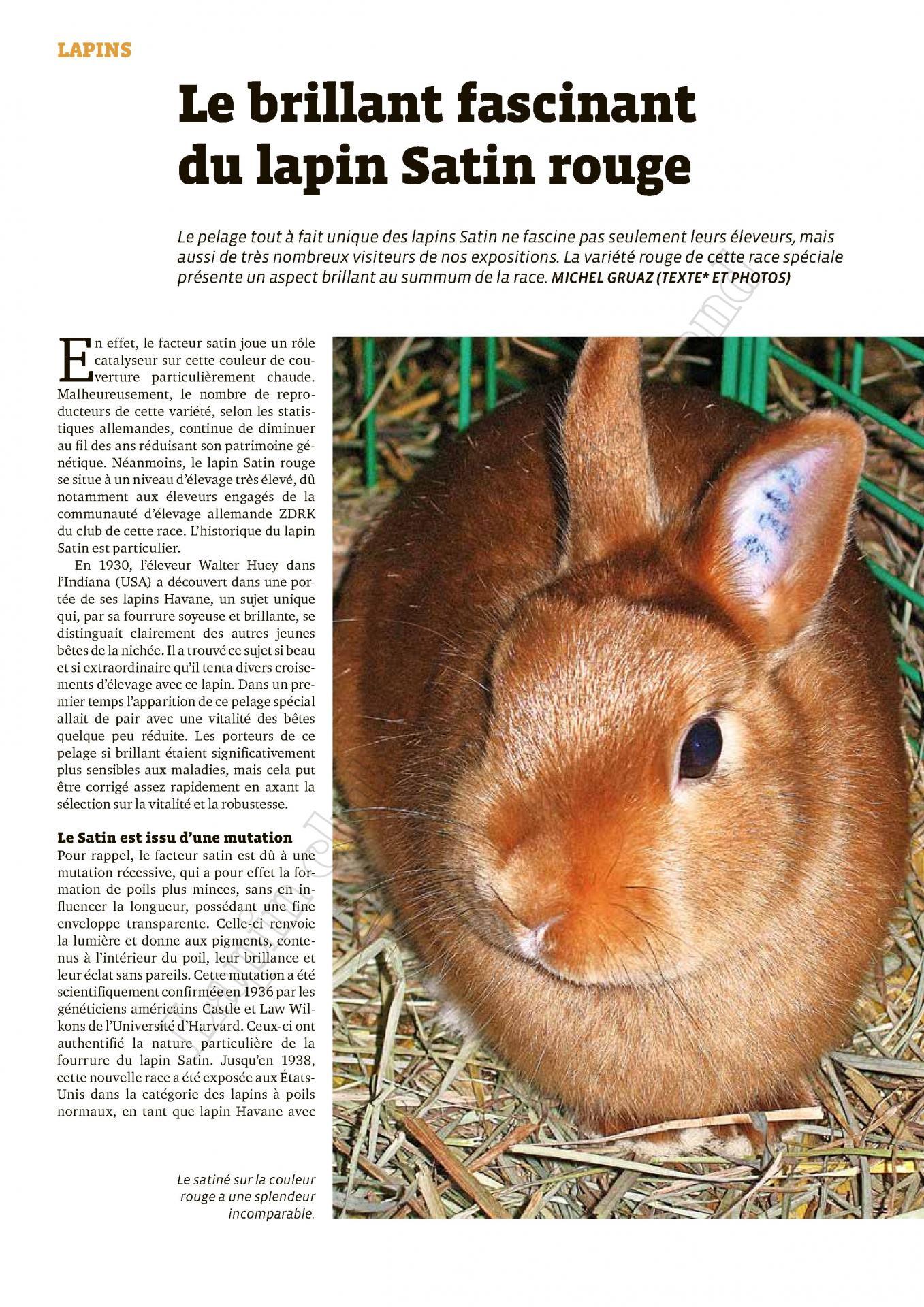 Le brillant fascinant du lapin satin rouge 1
