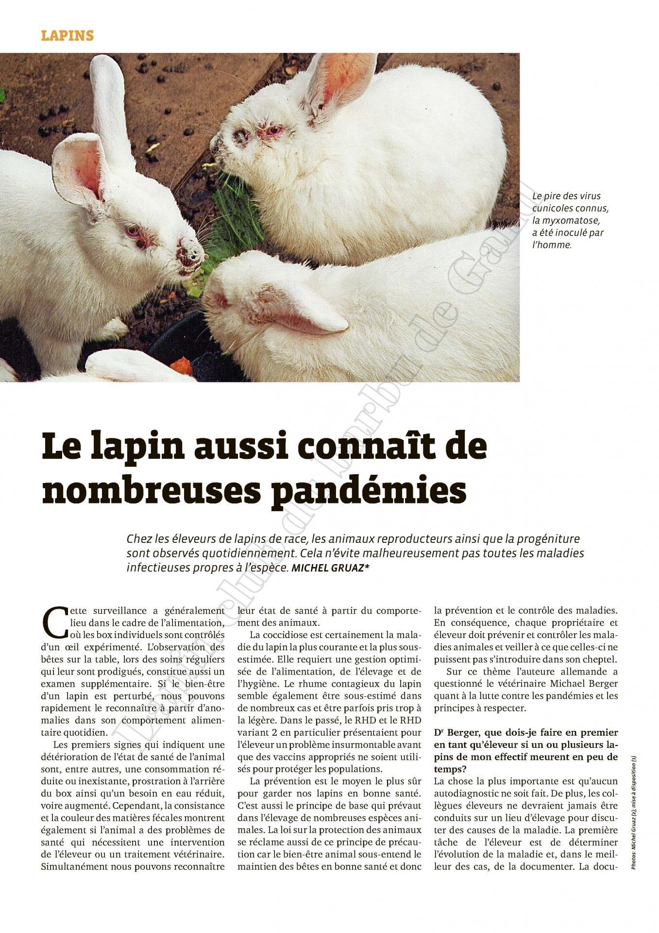 Le lapin aussi connait de nombreuses pandemies 1
