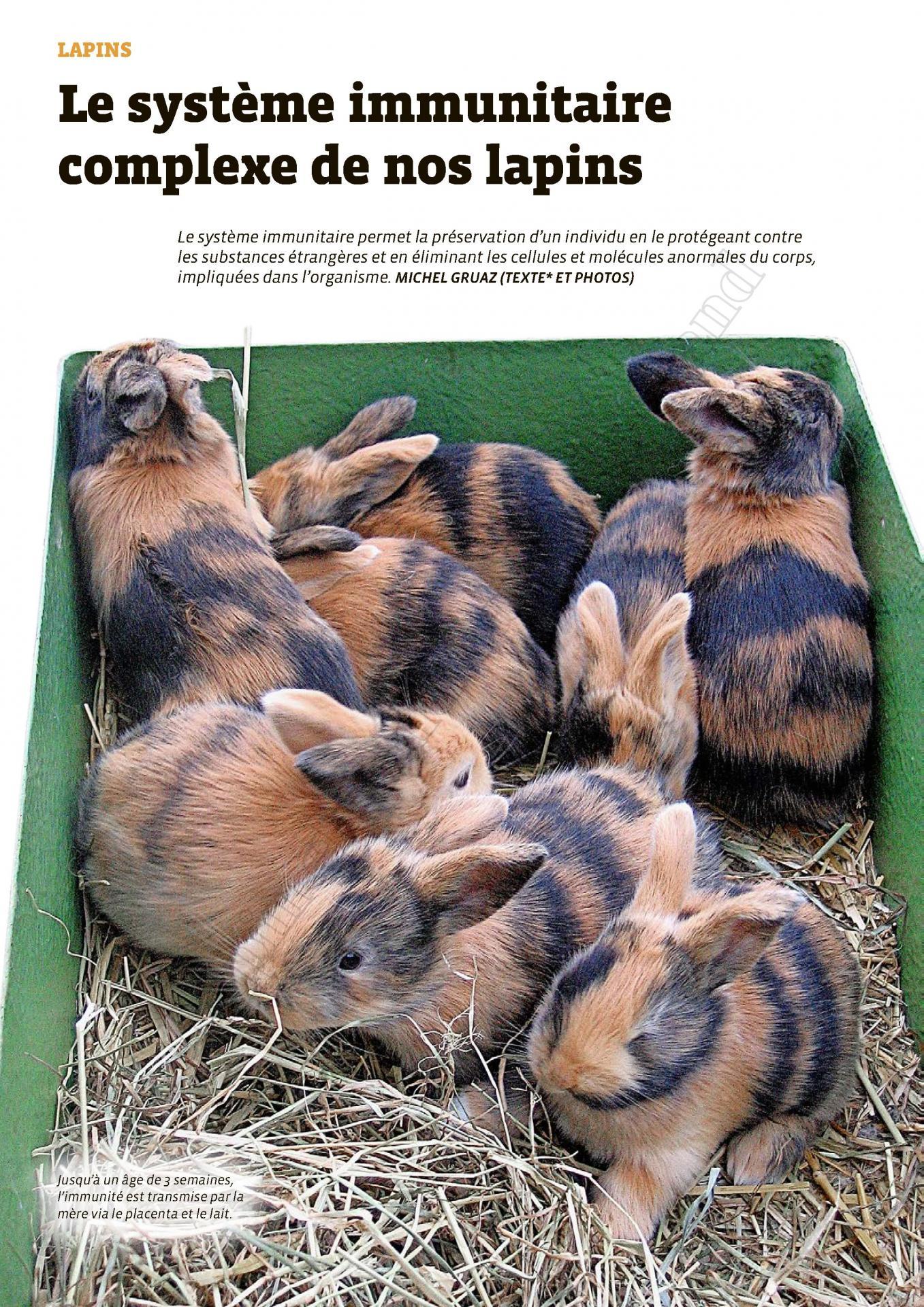 Le systeme immunitaire complexe de nos lapins 1
