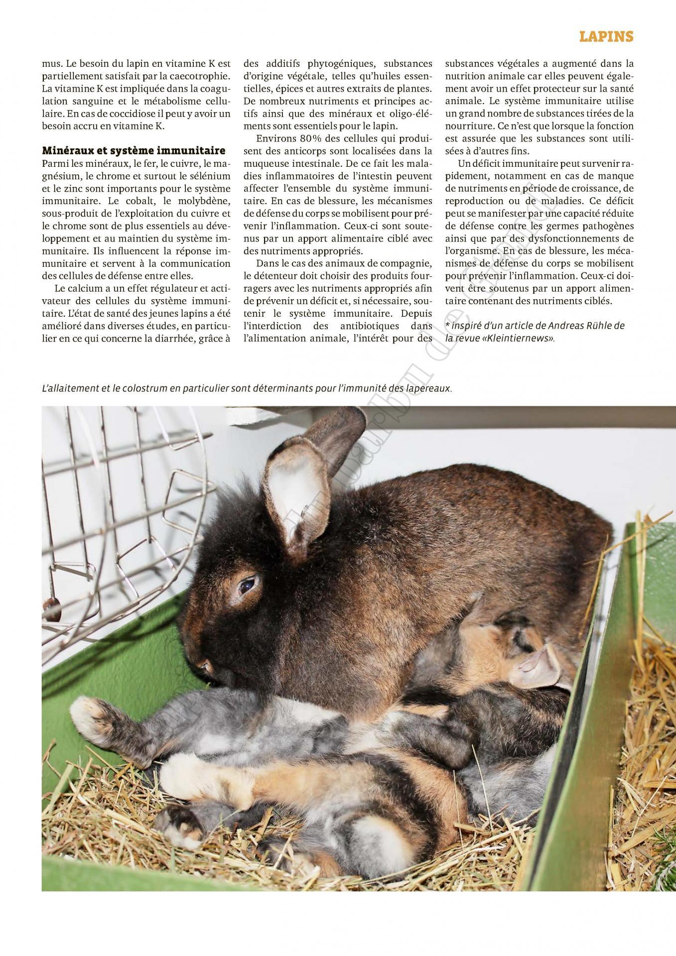 Le systeme immunitaire et l alimentation du lapin 2