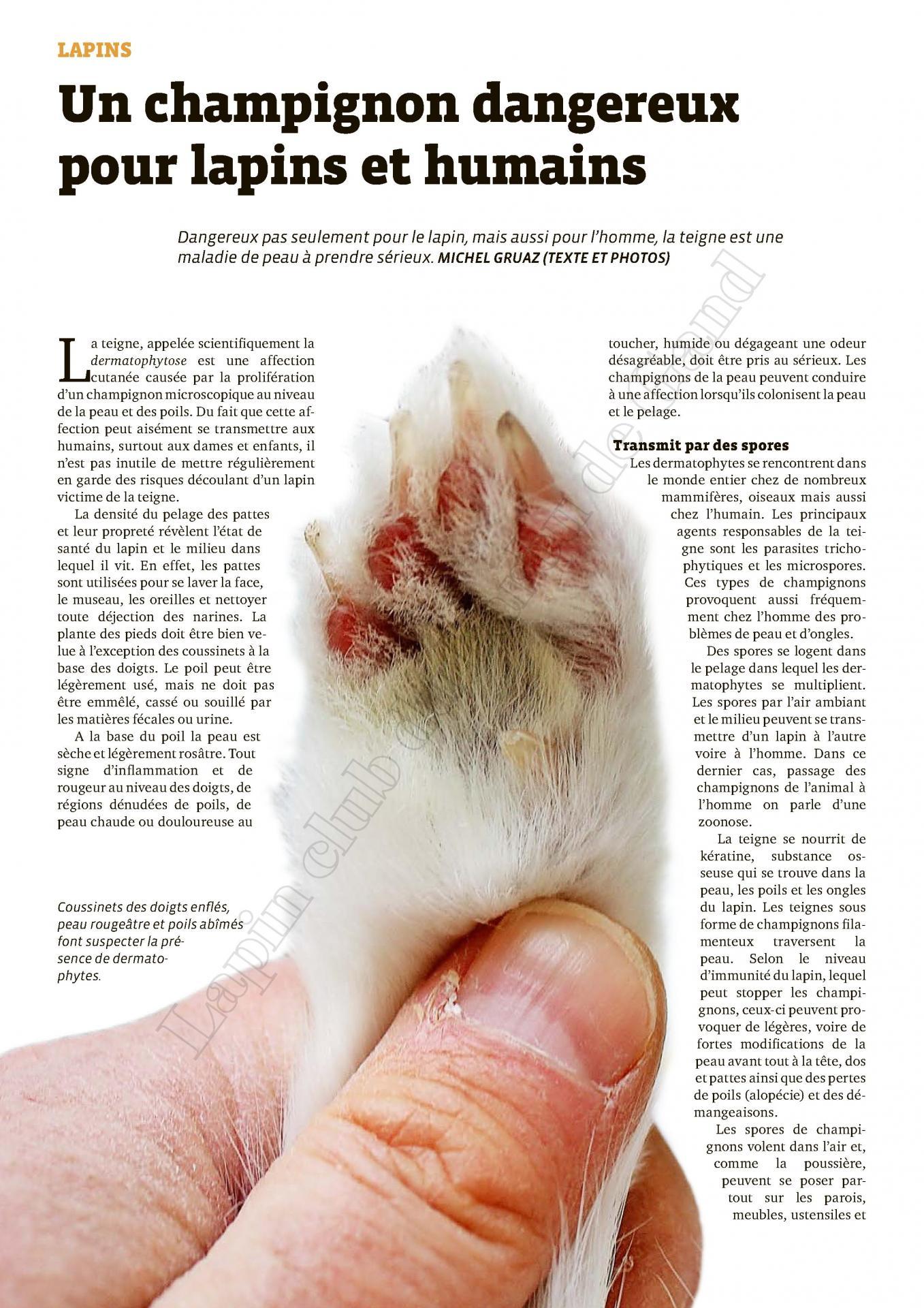 N 12 2020 un champignons dangereux pour lapin et humain 2
