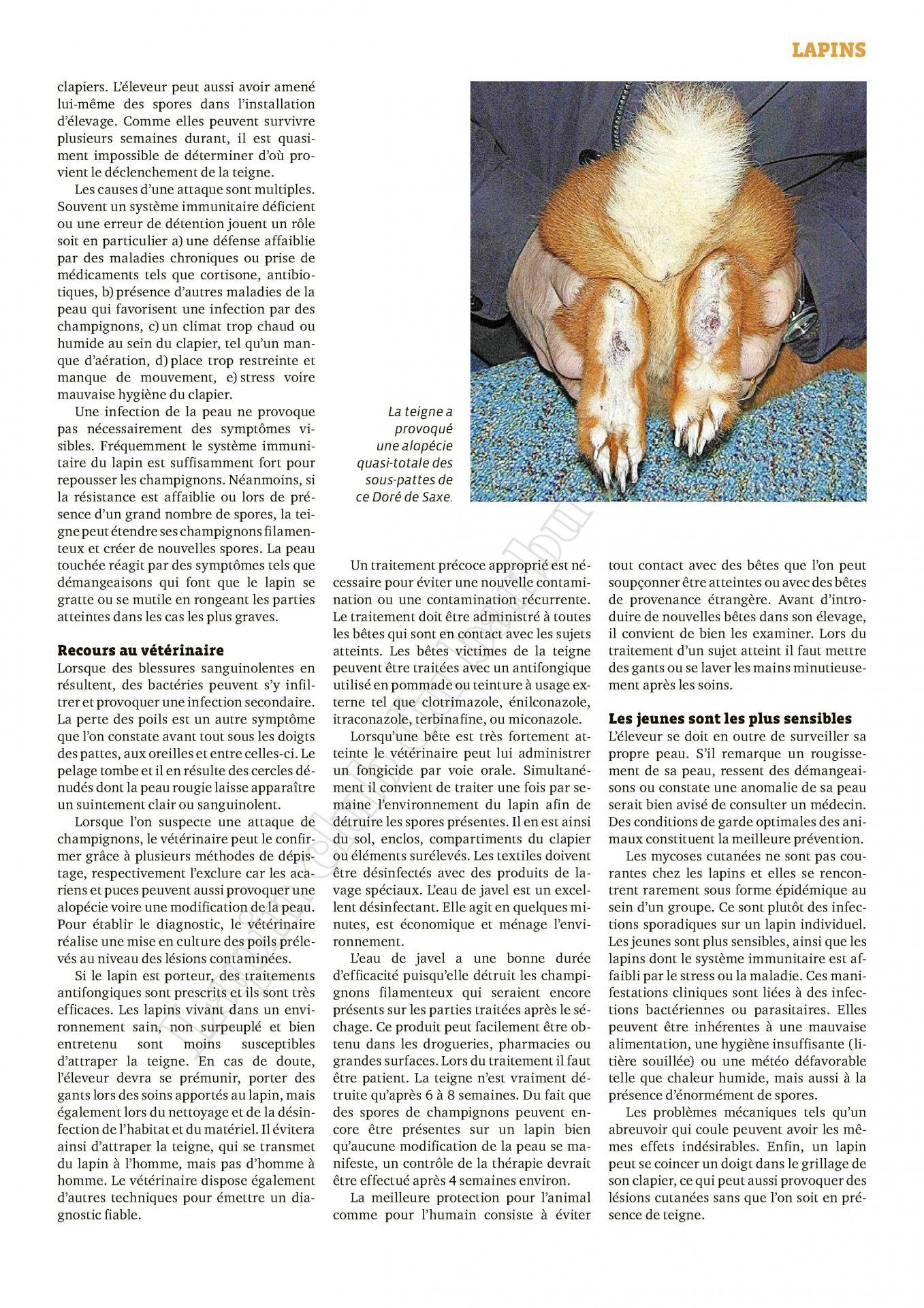 N 12 2020 un champignons dangereux pour lapin et humain 3