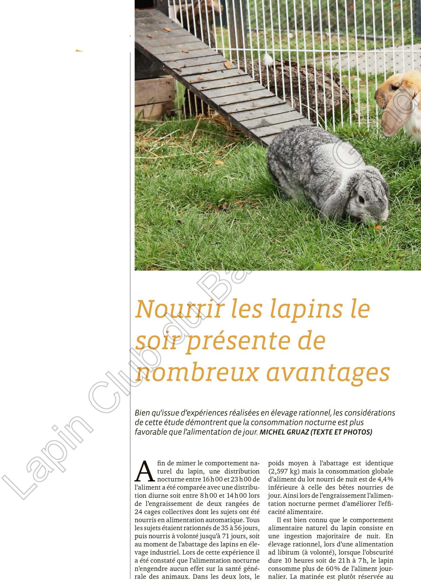 Nourrir les lapins le soir presente de nombreux avantages 1