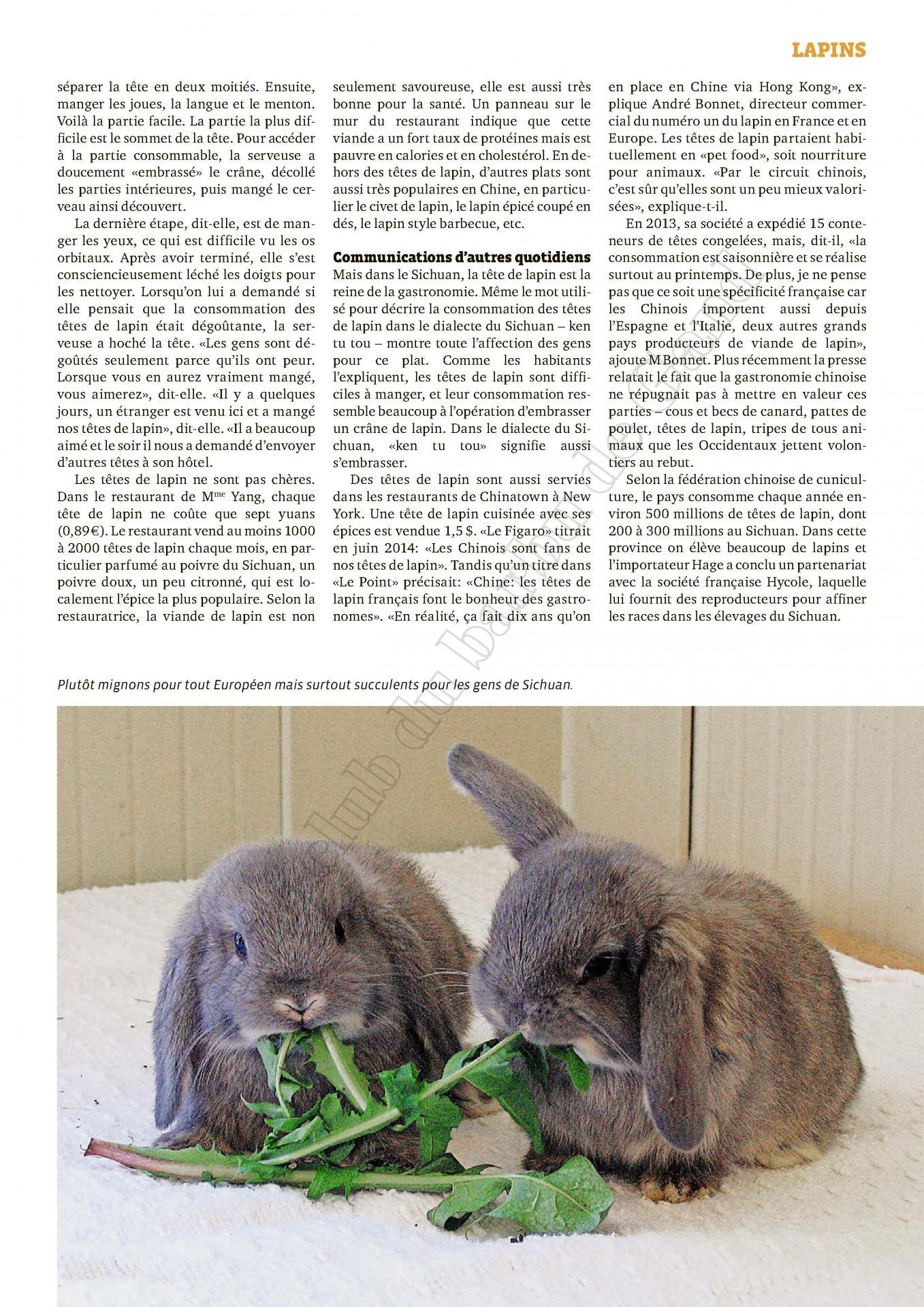 Tetes de lapin francais une delicatesse chinoise 2