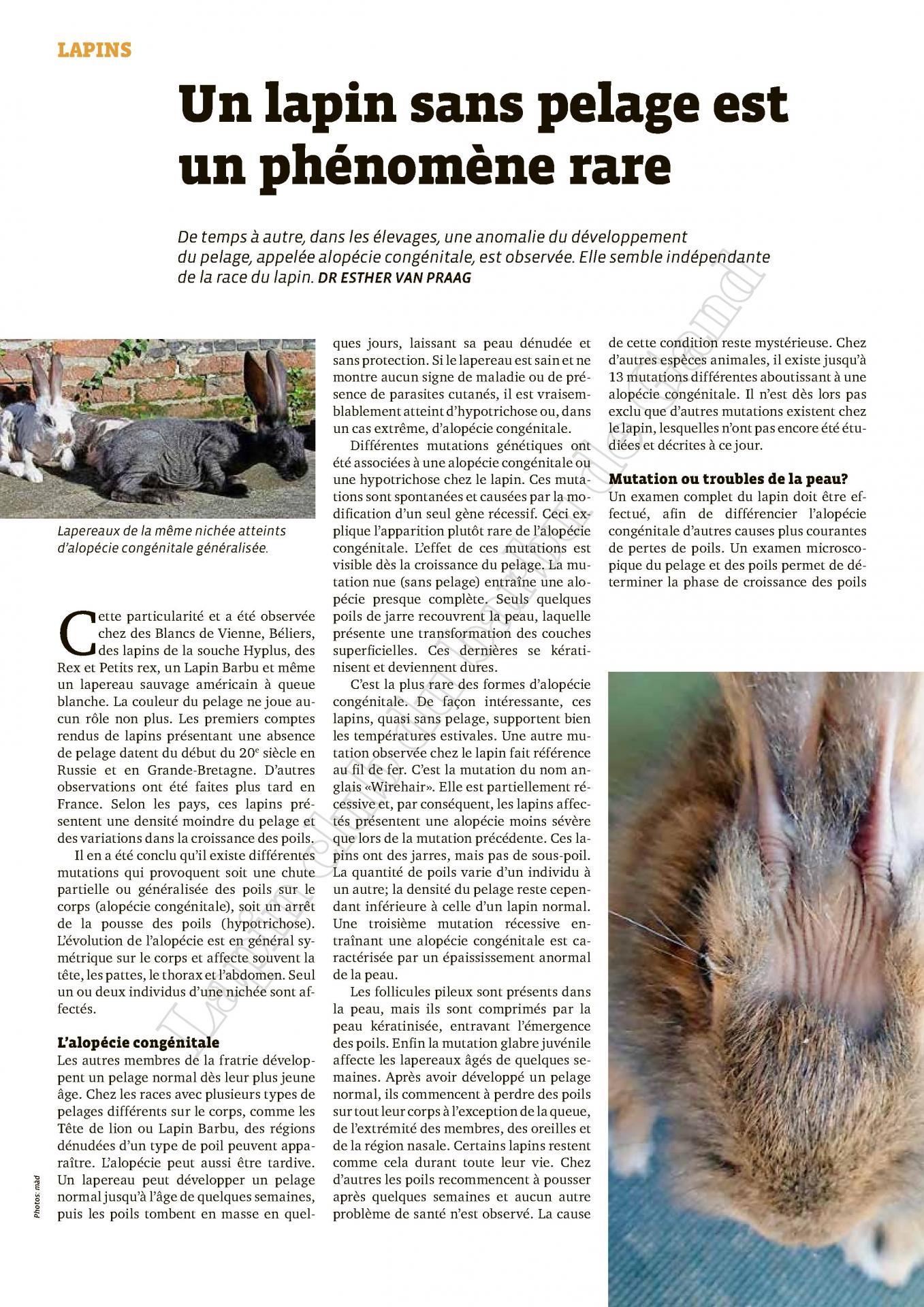 Un lapin sans pelage est un phenomene rare 1
